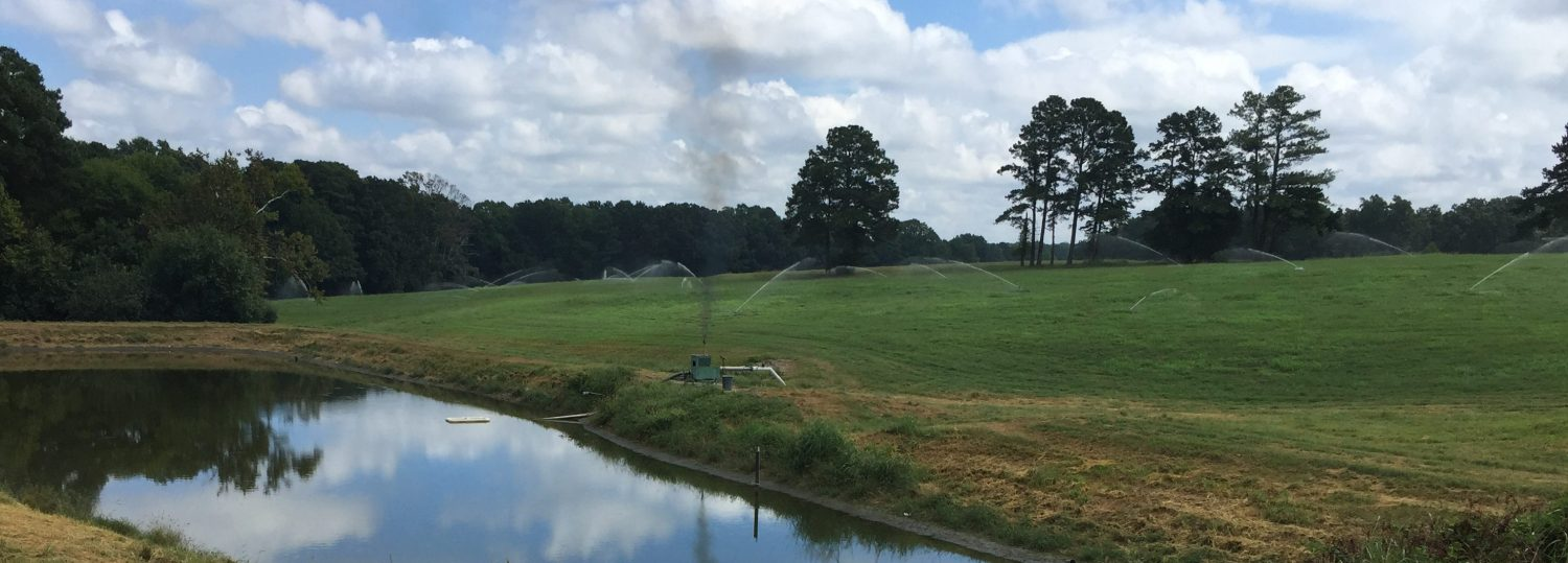 Lagoon content being irrigated to fields using a spray system sprinklers